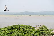 Irrawaddy, River, Ayeyarwady, mandalay, myanmar, burma