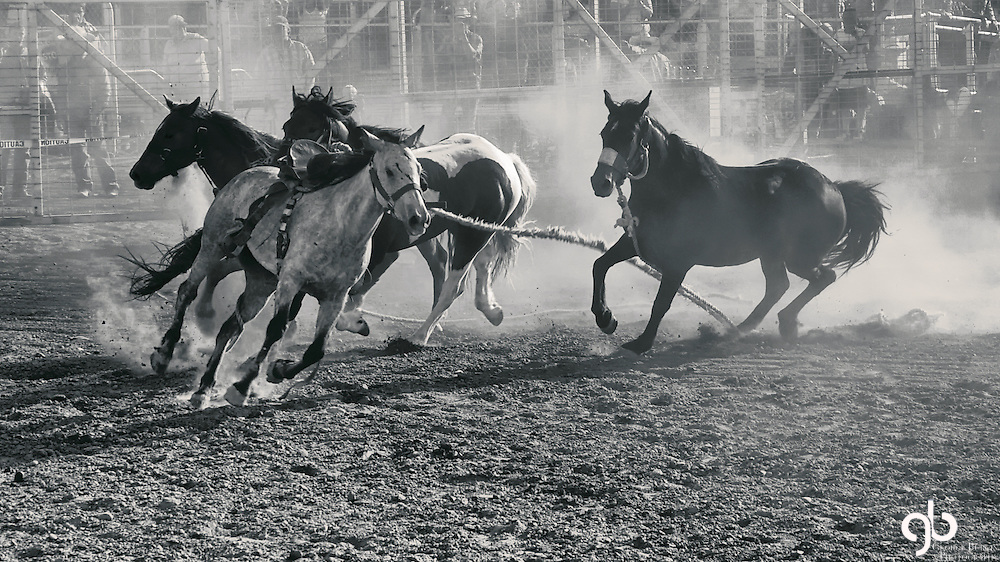 2012 Bucking Horse Sale, Miles City, Montana
