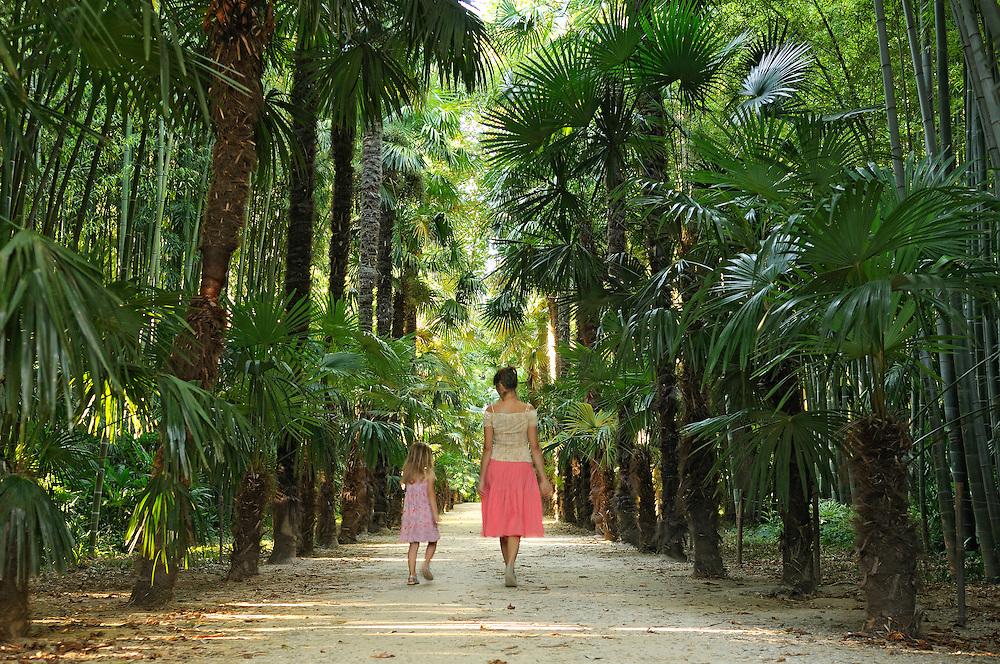 France, Languedoc Roussillon, Gard, Cevennes, Anduze, Prafrance, La Bambouseraie, allée des palmiers de Chine, trachycarpus fortunei