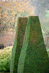 Two clipped yew pillars at Pettifers. Taxus baccata