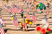 30 MAY 2011 - PHOENIX, AZ:  MARLENE RAMSEY, from Glendale, AZ, places American flags in headstones at Memorial Day services in the National Memorial Cemetery in Phoenix, AZ, Monday. Memorial Day was celebrated with services across the United States Monday.    Photo by Jack Kurtz