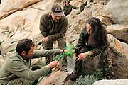 Marco Favelli, Dr. Trent Garner, Giulia Tessa, Giuseppe Sotgiu (von hinten nach vorne) vom englisch-italienischen Forscherteam arbeiten in der Felslandschaft an der Nordspitze Sardiniens. In den Felstümpeln werden Kaulquappen des Sardischen Scheibenzünglers (Discoglossus sardus) gefangen.