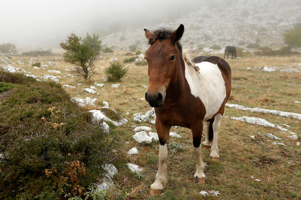 A horse at Biokovo mountain Nature Park, Croatia.