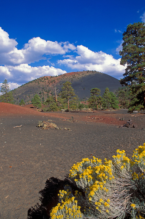 Afternoon light on Rabbit Brush under Sunset Crater, Sunset Crater National Monument, Arizona