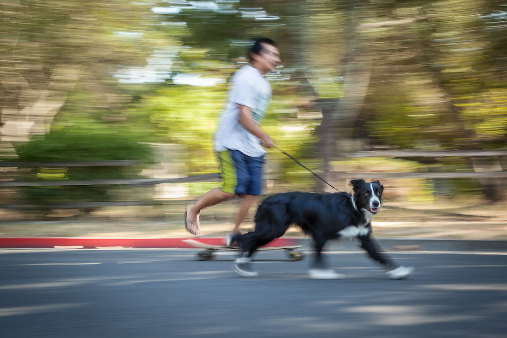 Student Max Caldera and his six month old border Collie, Stella Blue, are out for a run in Calistoga