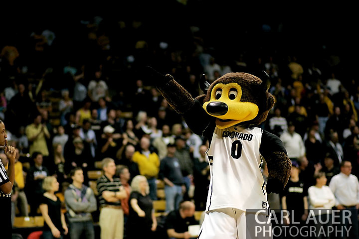November 27, 2012: Chip the Buffalo pumps the crowd up during the NCAA Basketball game between the Texas Southern Tigers and the Colorado Buffaloes at the Coors Event Center in Boulder Colorado