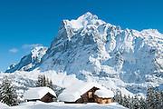 Bild von Schneebedeckte Wetterhorn im Winter<br /> <br /> Picture of the snowcovered Wetterhorn in winter
