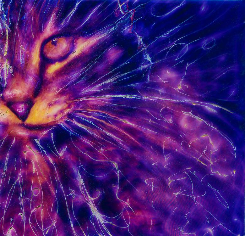 Cat, polaroid manipulation
