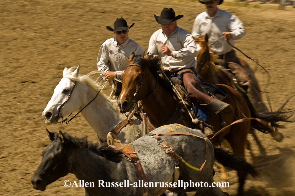 Pickup men Jay Shaw, Kyle Shaw and Lynn Ashley pick up bareback bronc, Miles City Bucking Horse Sale, Montana, <br /> MODEL RELEASED