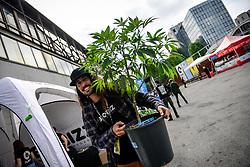 May 3, 2019 Milan, Italy - A man carries a growing cannabis plant as her arrives to Hemp Fest International Cannabis Expo Milan. (Credit Image: © Claudio Furlan/LaPresse via ZUMA Press)