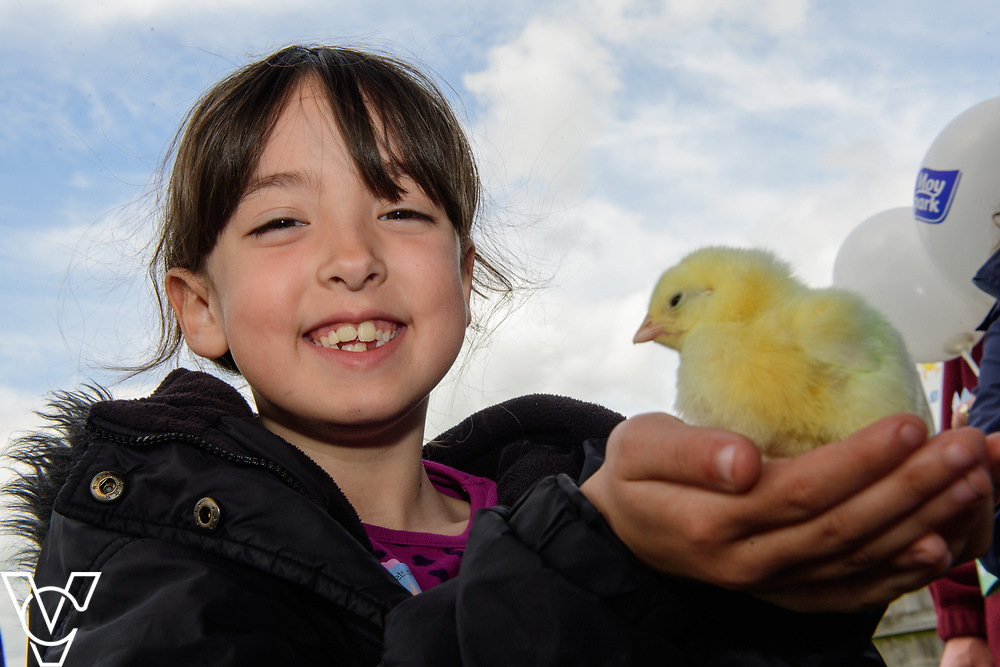 As part of Open Farm Sunday, May Park's Barr Farm in Billinghay, Lincolnshire, was open to the public.  Pictured is Keeley Barnatt (seven).<br /> <br /> PIcture: Chris Vaughan Photography<br /> Date: May 21, 2017