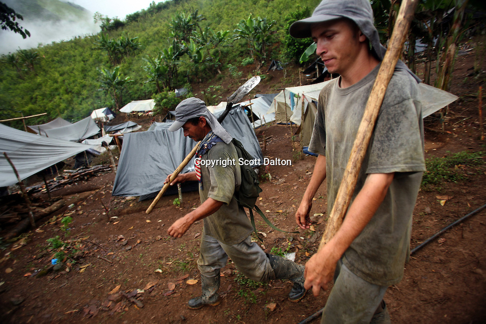 Workers hired by the Colombian government to manually eradicate coca crops return to their camp after a long day of work, in El Campanario, in a remote area of the southern Colombian state of Nariño, on Thursday, June 21, 2007. (Photo/Scott Dalton)