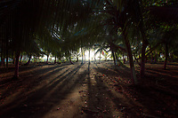 Palms and beach near Limon, Costa Rica. Copyright 2017 Reid McNally.