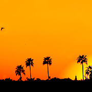 A bright orange and yellow sunset in Phoenix, Arizona silhouetting the palm trees in the distance.