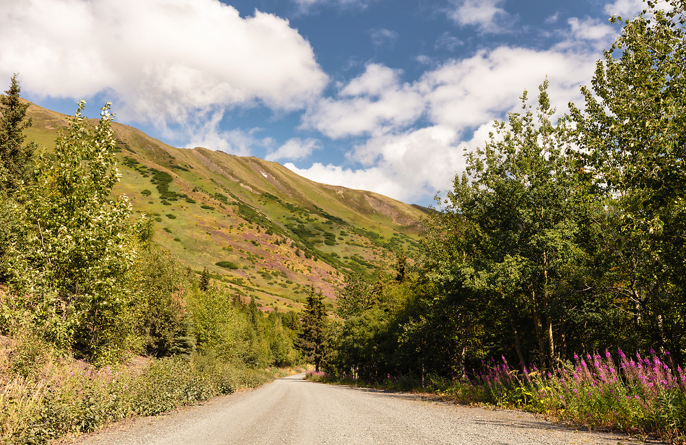 Palmer Creek Road near Hope in Southcentral Alaska. Summer. Afternoon.