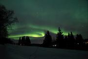 Aurora borealis glowing over fir trees