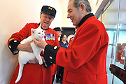 London News pictures. 24.02.2011. Chelsea Pensioners meet the Mac the deaf cat at Battersea Dogs and Cats Home. Starting in March, the Chelsea Pensioners will become well acquainted with the dogs and cats at the charity at Battersea Dogs and Cats home, when Battersea walks its dogs across the Thames River to spend time at the Royal Hospital. In turn, the charity will invite the veteran British Army soldiers in to interact with the many animals it takes in every year. Picture Credit should read Stephen Simpson/LNP