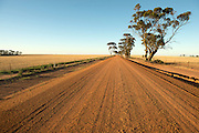 Wyalkatchem North Road, Wyalkatchem, Western Australian Wheatbelt. 08 December 2012 - Photograph by David Dare Parker