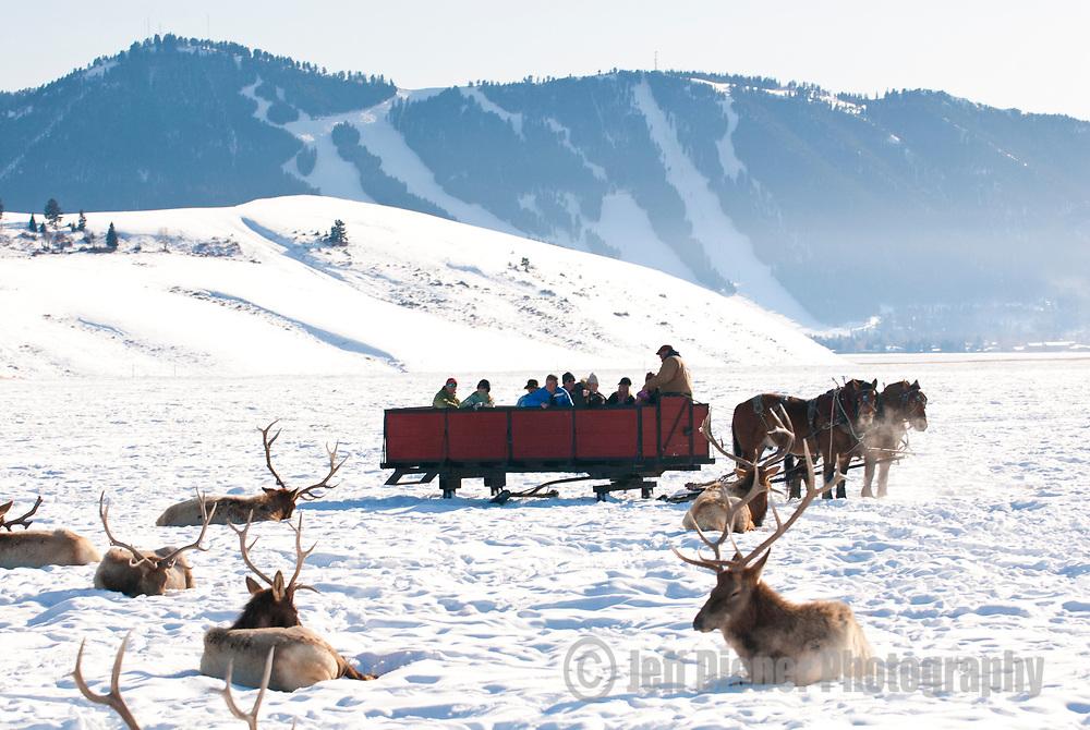 Visitors ride the Elk Refuge Sleigh Ride in the National Elk Refuge in Jackson Hole, Wyoming.
