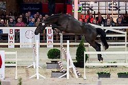 026, Rex Van't Roth<br /> BWP Hengstenkeuring -  Lier 2020<br /> © Hippo Foto - Dirk Caremans<br />  17/01/2020