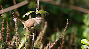 Bird perched on twig, St Lucia Wetlands, South Africa