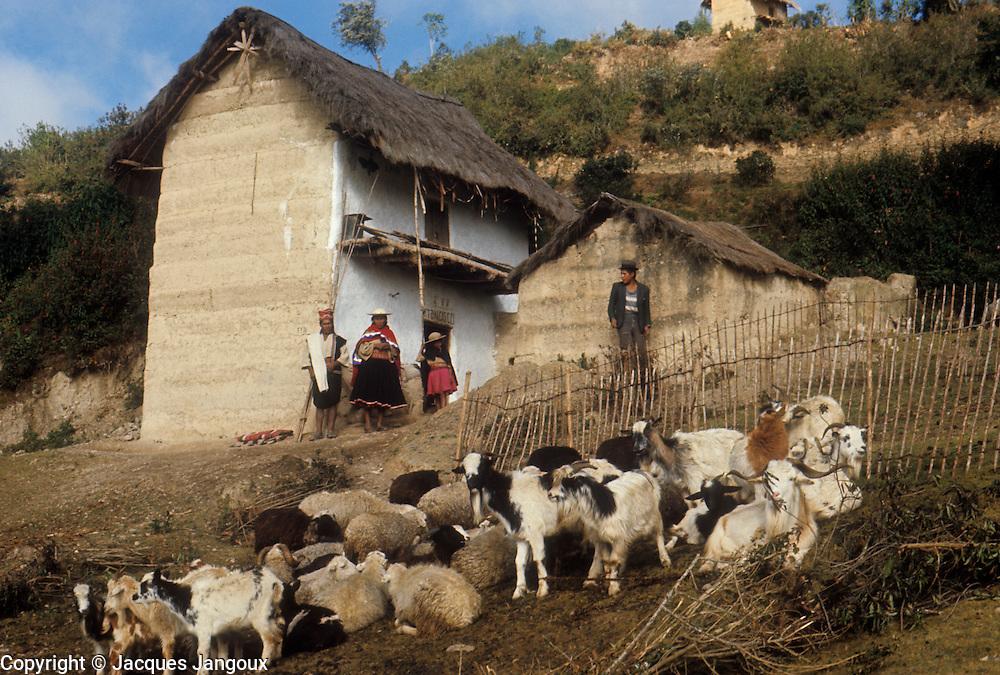 South America, Bolivia. Andes, hamlet of Ayata, Departamento La Paz, Provincia Munecas. House of Quechua Indians, with goats and sheep.