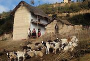 South America, Bolivia. Andes, hamlet of Ayata, Departamento La Paz, Provincia Munecas. House of Quechua Indians, with goats and sheep.