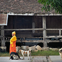 Buddhist Monk with Playing Dogs in Luang Prabang, Laos <br />