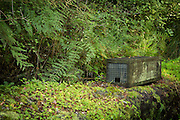 A wooden stoat trap in the Fiordland forest, along the Milford Track.