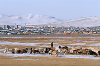 Mongolie. Province de Töv en hiver. Troupeau devant la ville de Zuunmod. // Mongolia Töv province in winter. Cattle outside the town of Zuunmod.