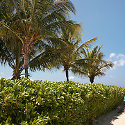 Palm tree lined path to the beach at Grace Bay, Providenciales, Turks & Caicos