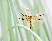 Beautiful dragonfly among the light and design of the grasses