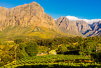 Africa, agriculture, Banghoek Valley, Cape Town, Cape Winelands, Digital, Horizontal, Landscape, Mountain, Oldenburg Farm, Oldenburg Vineyards, Oldenburg Wines, Polarizer, Scenery, South Africa, Stellenbosch, Vineyards, Zevenrivieren Road