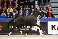 640 - Toto JR<br /> KWPN Stallion Selection - 's Hertogenbosch 2014<br /> © Dirk Caremans