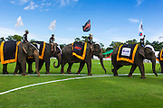"28 AUGUST 2013 - HUA HIN, PRACHUAP KHIRI KHAN, THAILAND:  Elephants parade into the opening of the King's Cup Elephant Polo Tournament in Hua Hin, Thailand. The tournament's primary sponsor in Anantara Resorts and the tournament is hosted by Anantara Hua Hin. This is the 12th year for the King's Cup Elephant Polo Tournament. The sport of elephant polo started in Nepal in 1982. Proceeds from the King's Cup tournament goes to help rehabilitate elephants rescued from abuse. Each team has three players and three elephants. Matches take place on a pitch (field) 80 meters by 48 meters using standard polo balls. The game is divided into two 7 minute ""chukkas"" or halves. There are 16 teams in this year's tournament, including one team of transgendered ""ladyboys.""    PHOTO BY JACK KURTZ"