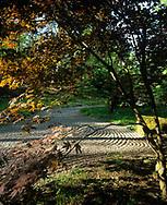 Acer palmatum 'Heptalobum' & raked gravel. Japanese Garden, Ronneby. Design by Sven-Ingvar Andersson.