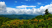 Flame Azaleas highlight the trail along the Roan Balds at Roan Mountain State Park in Tennessee.  <br /> <br /> &copy; Photography by Kathy Kmonicek