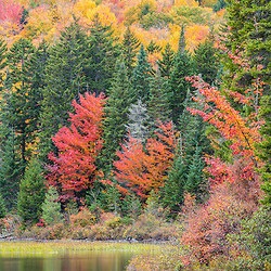 Fall foliage at Little Greenough Pond in Wentworths Location, New Hampshire. Northern Forest.