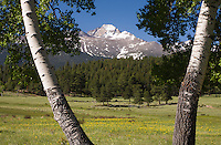 14,255 ft. Longs Peak as seen from Upper Beaver Meadows, Rocky Mountain National Park.  Colorado, USA.