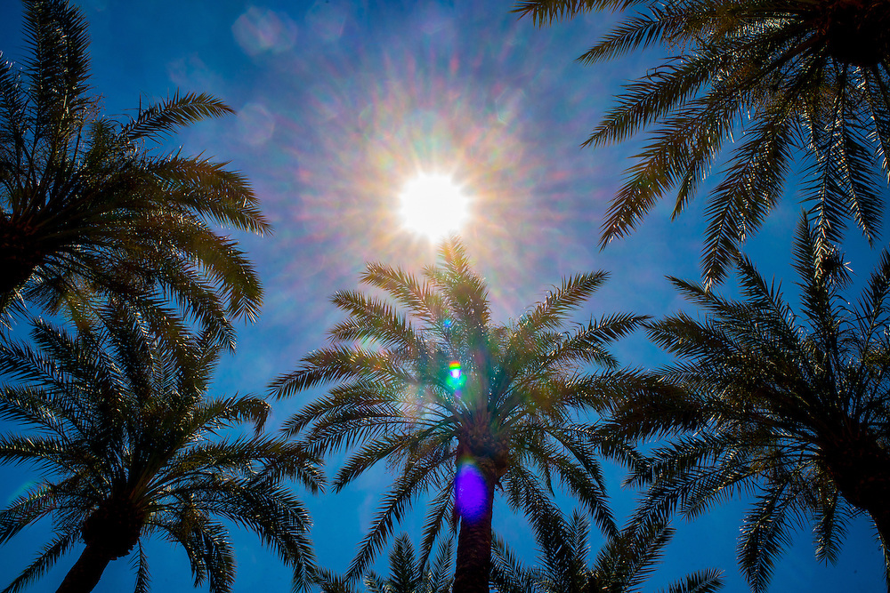 The tops of palm trees and bright sun in Palm Springs, California