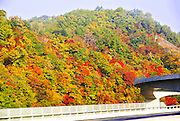 Japanese fall colours