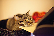 """Diary about a cat called """"Speedy"""" living on the Czech country side close to Prague."""
