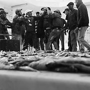 A Souiria Kedima, sur le carreau, la vente à la criée se déroule toujours dans la tension des prix et dégénère souvent en bagarre. Pêcheurs et armateurs viennent vendre leur récolte du jour aux marchands de poisson du village. Mais les temps sont durs. Les acheteurs ont vu le prix de la sardine triplé en dix ans. Elle se vend aujourd'hui entre 8 et 12 dirhams le kilo sur le marché.