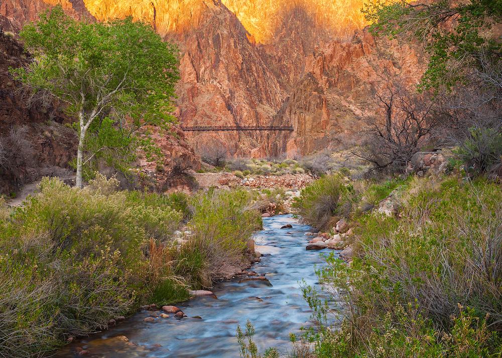 Looking downstream along Bright Angel Creek towards the Black Bridge near Phantom Ranch. Grand Canyon National Park in Arizona.
