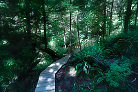 Tofino Rainforest trail at Pacific Rim National Park, Vancouver Island, BC, Canada.