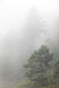 WA14437-00...WASHINGTON - Trees in the fog at Oil City Beach, Olympic National Park.