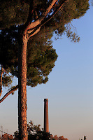 A pine tree and a smoke stack from a nearby factory lit by late afternoon sun in the industrial suburb of Santa Coloma de Cervelló, home of Colonia Guell in Barcelona, Spain