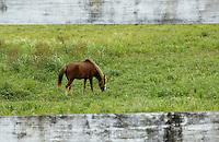 Horse, El Yunque, Puerto Rico