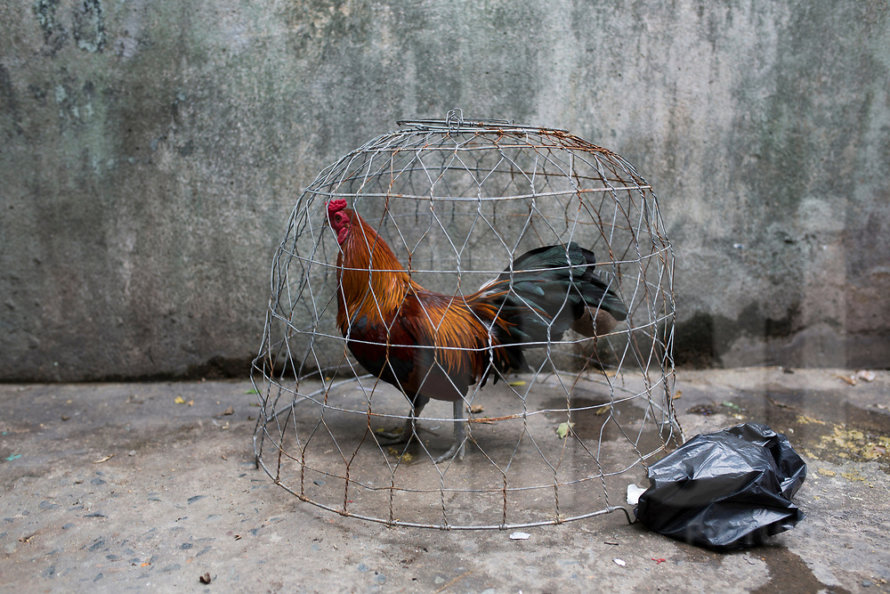 Rooster in a cage, Ho Chi Minh City, Vietnam, Southeast Asia