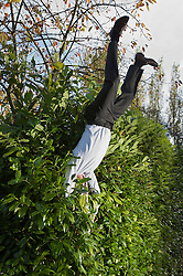 Businessman landing in a hedge upside down